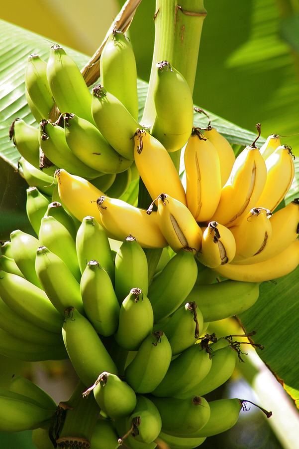 Banana Tree Urban Wellness